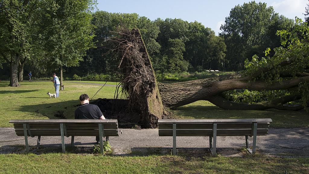Omgevallen boom bij Sloterplas